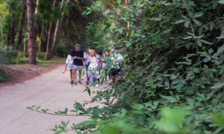 Los beneficios de pasear entre los árboles
