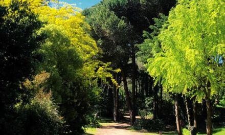 Cariló, el bosque encantado con más de 100 años.